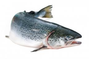 Regulate Salmon Smolt Transformation
