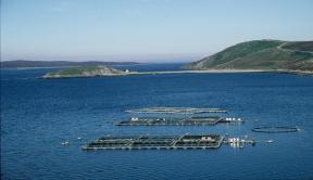 Norway salmon prices still dropping
